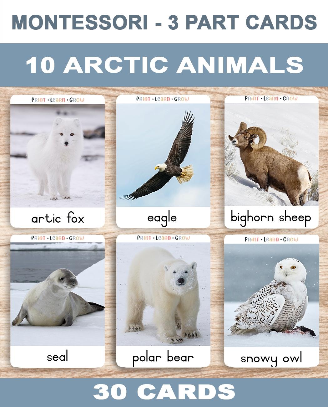0. Artic Animals – CoveRa