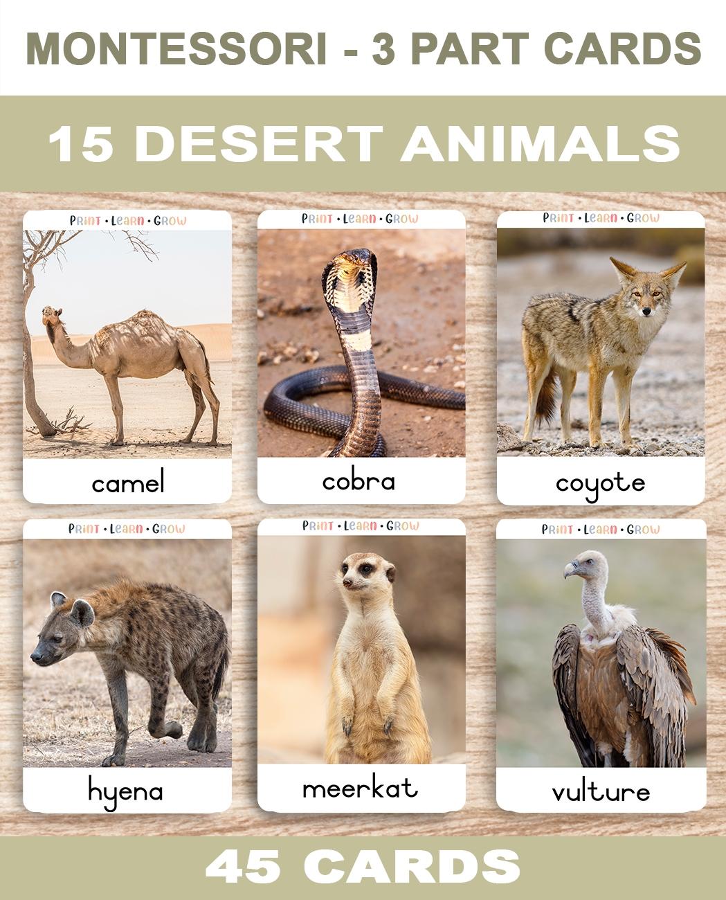 0. Desert Animals – Covera