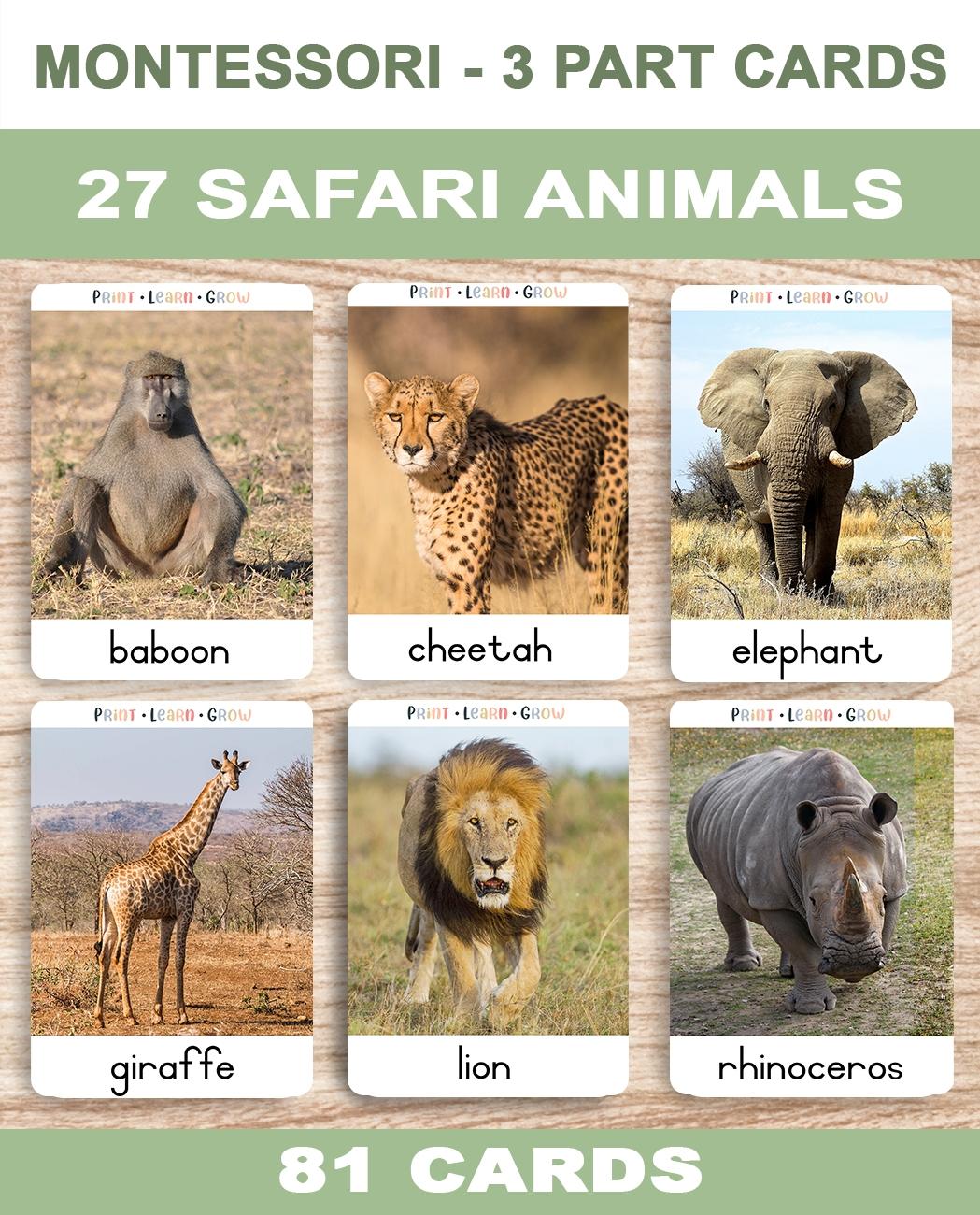 0. Safari Animals – Cover – TemplateA