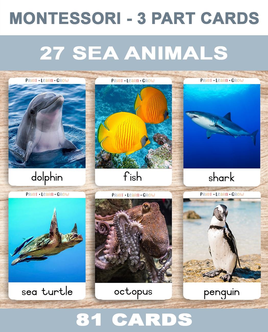 0. Sea Animals – Cover – TemplateA