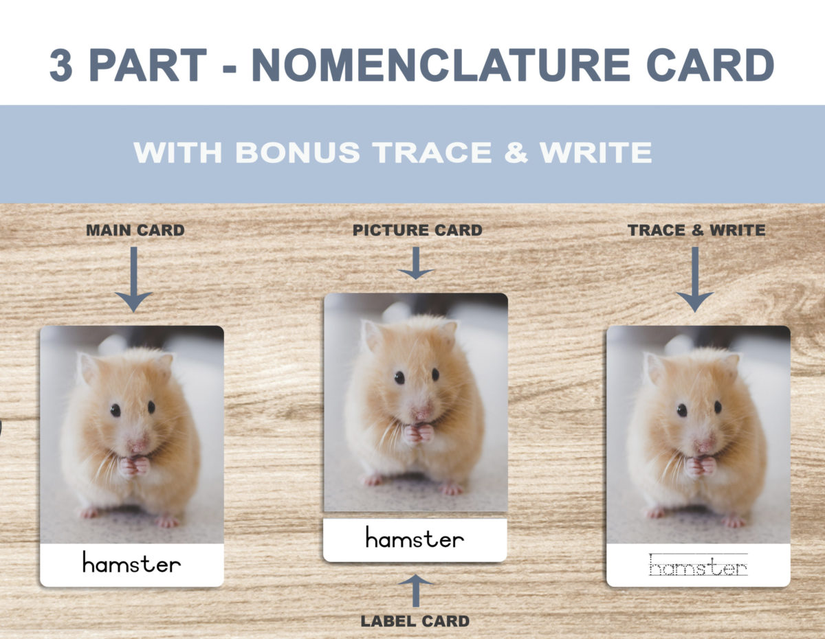 1. Pets – Nomenclature Template