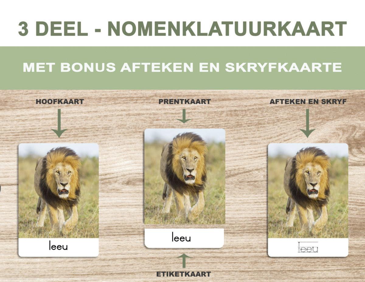 1. Safari Animals – Nomenclature Template
