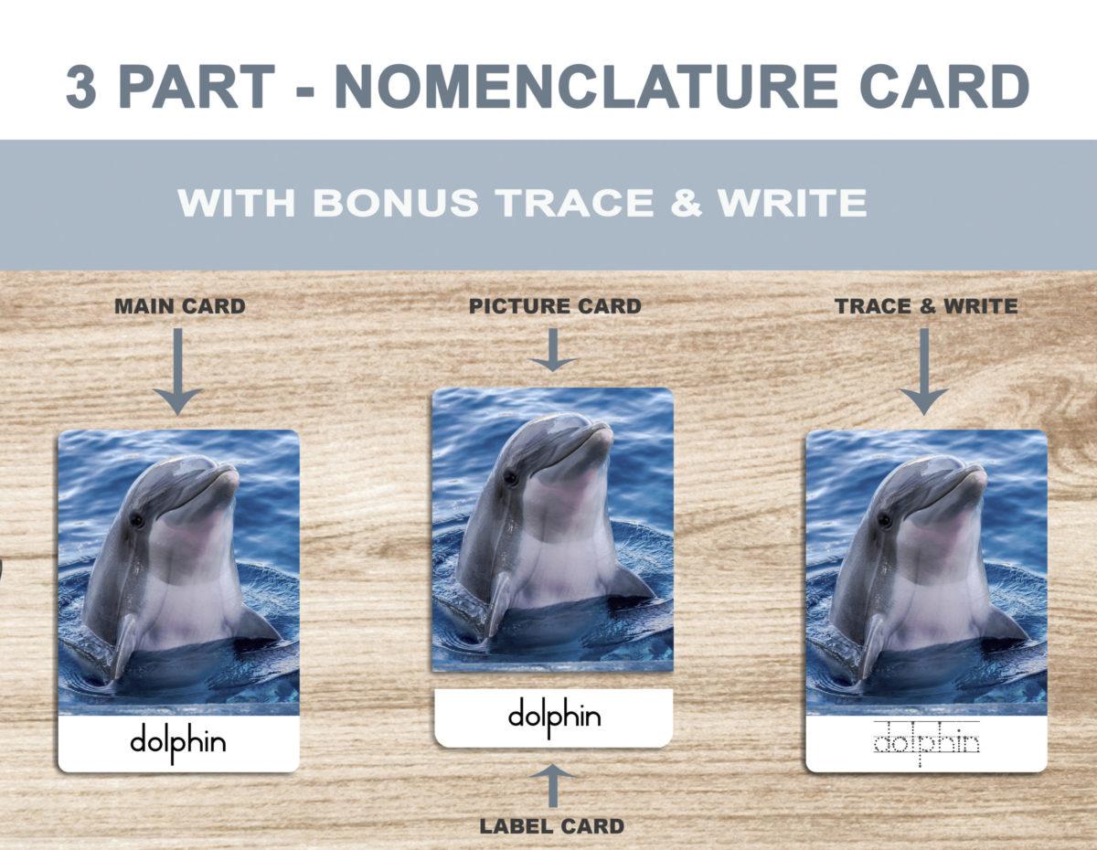 1. Sea Animals – Nomenclature Template