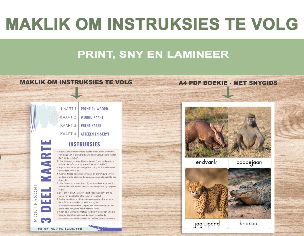 2. Safari diere – Instructions Template