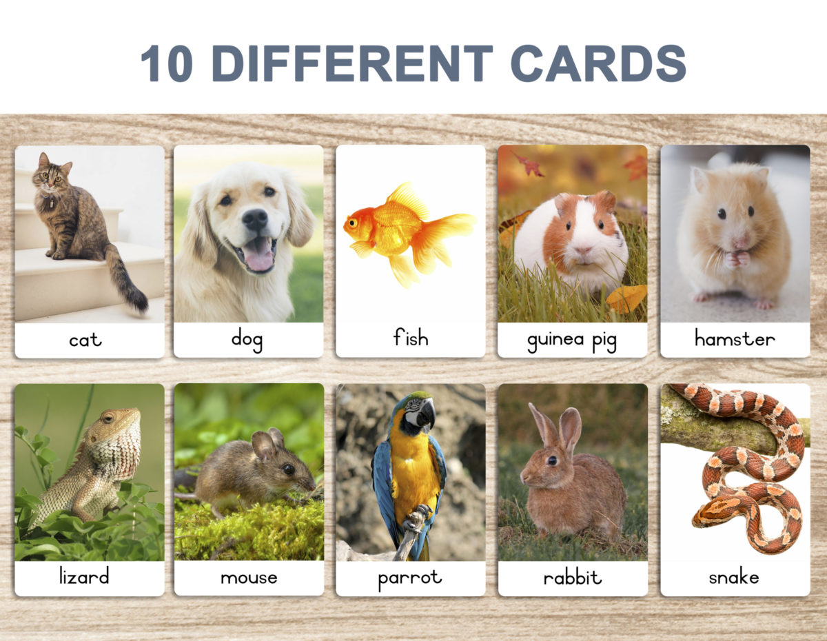 3. Pets – Flash Cards template