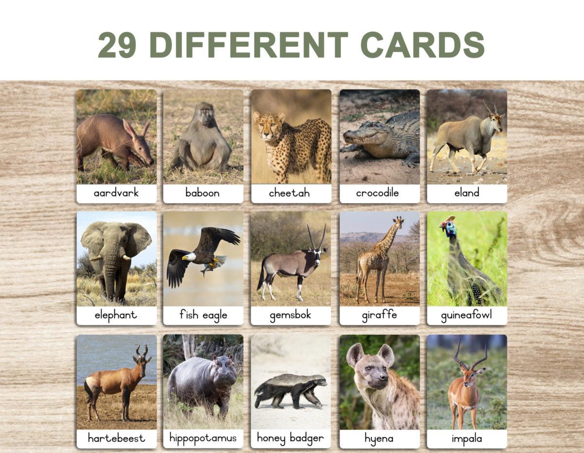 3. Safari Animals – Flash Cards template