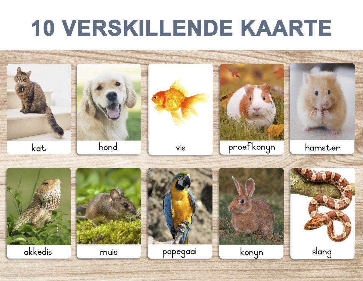 3. Troeteldiere – Flash Cards template