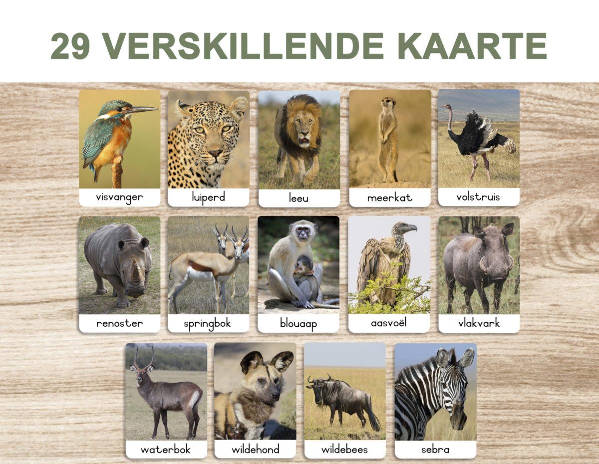 3A. Safari diere – Flash Cards template