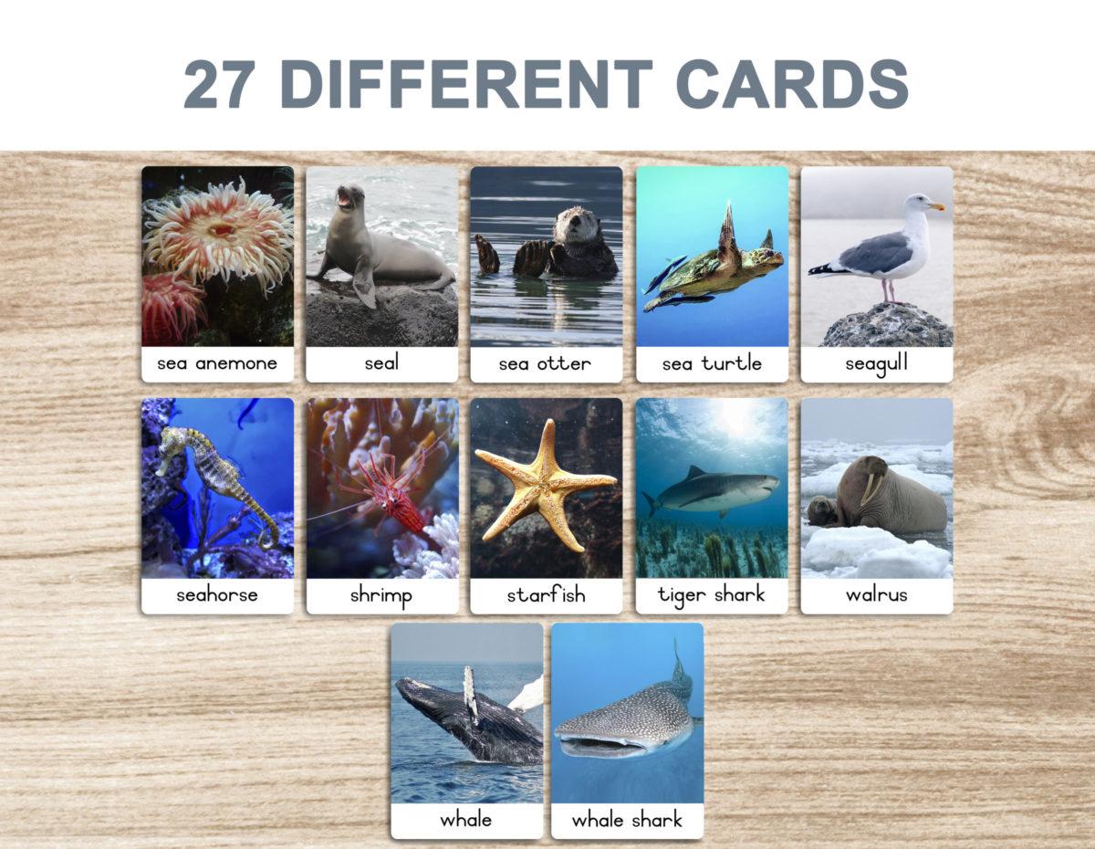3a. Sea Animals – Flash Cards template