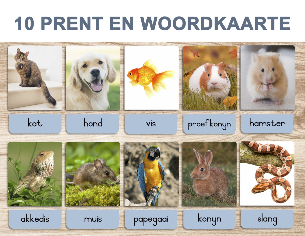 5. Pets – Picture and Word Template 1