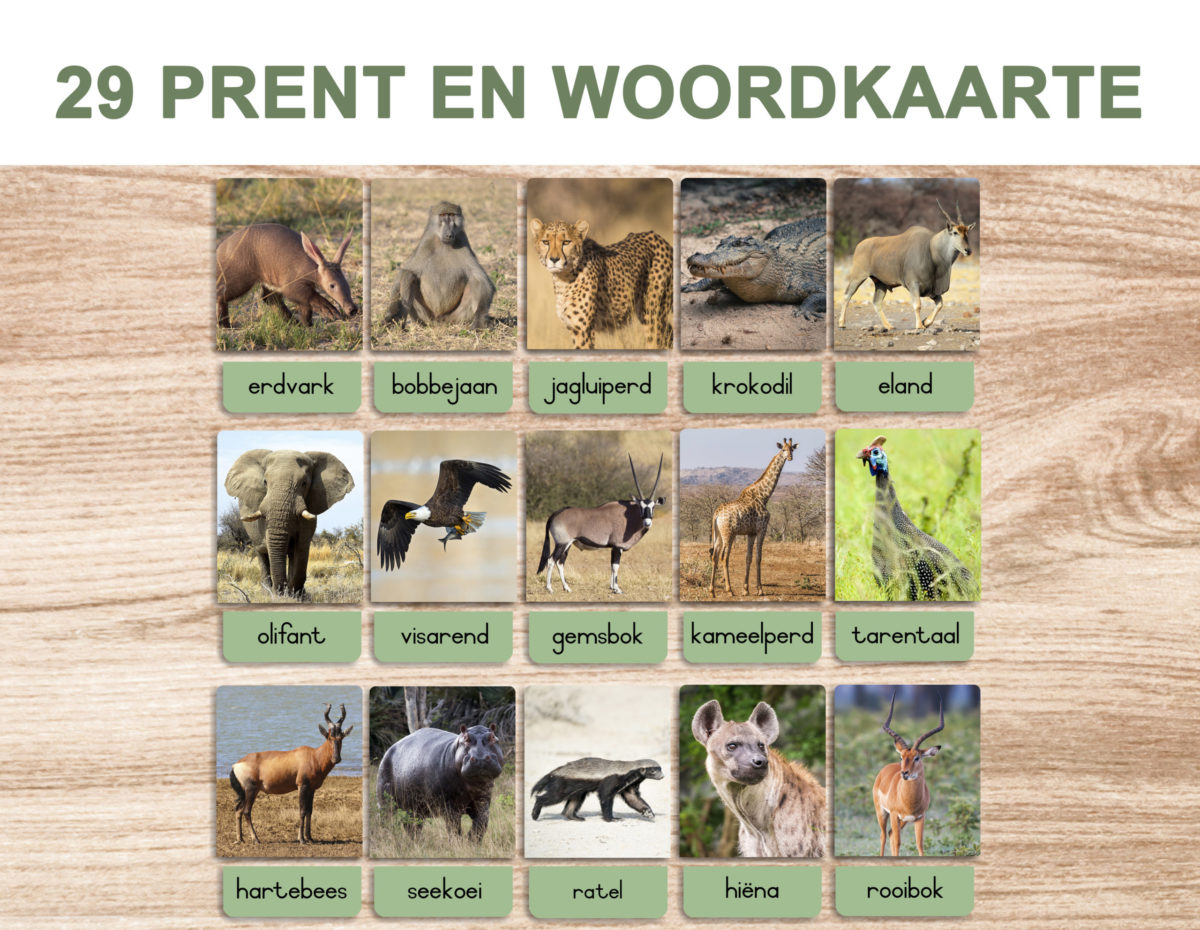 5. Safari Animals – Picture and Word Template 1