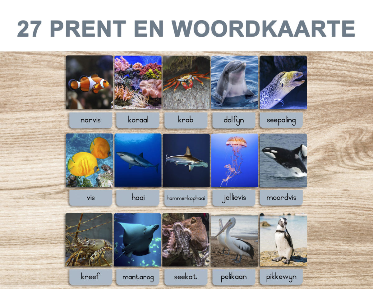 5. Sea Animals – Picture and Word Template 1