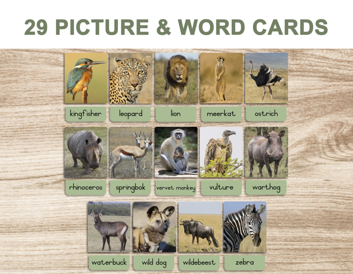 5a. Safari Animals – Picture and Word Template 1