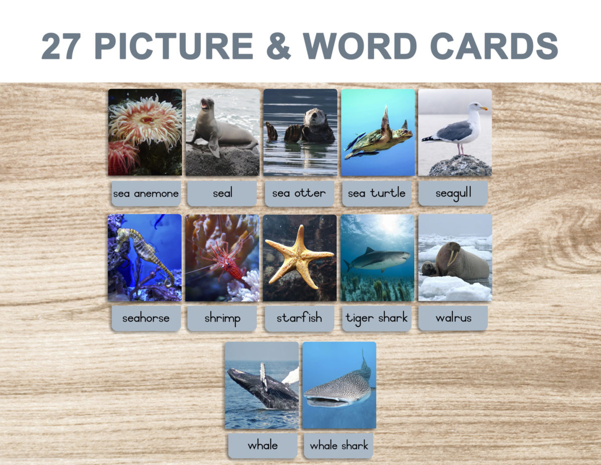 5a. Sea Animals – Picture and Word Template 1