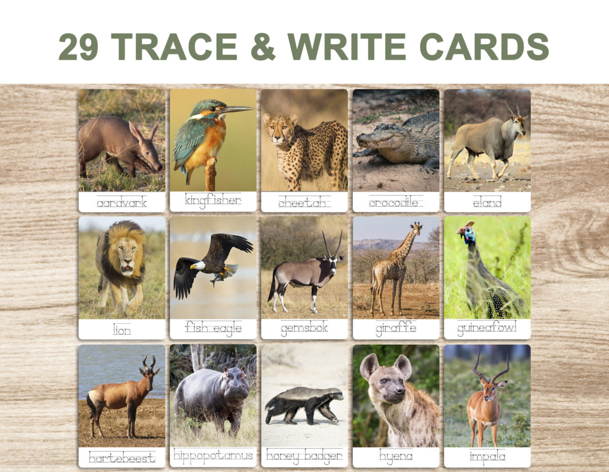 7. Safari Animals – Trace and Write Cards template