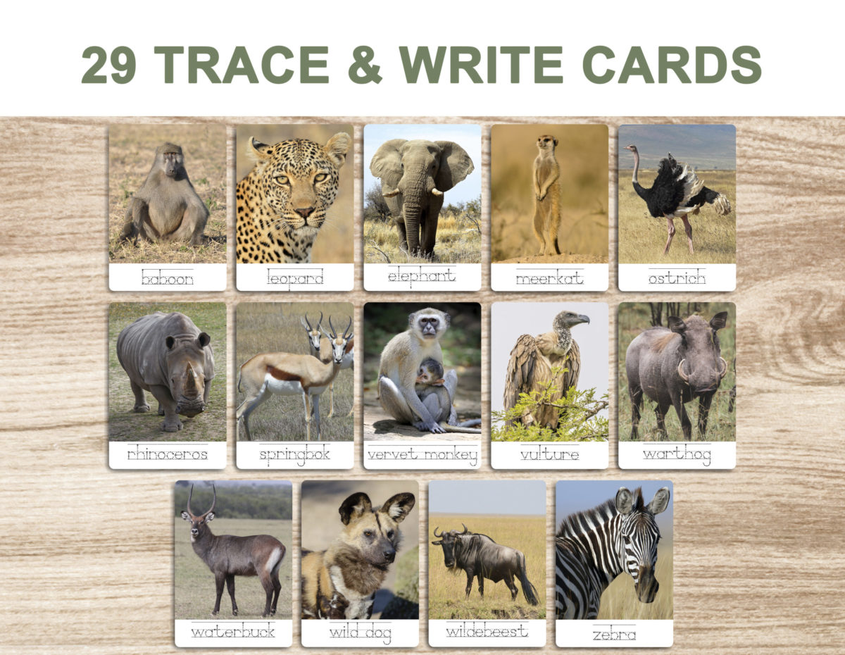 7a. Safari Animals – Trace and Write Cards template