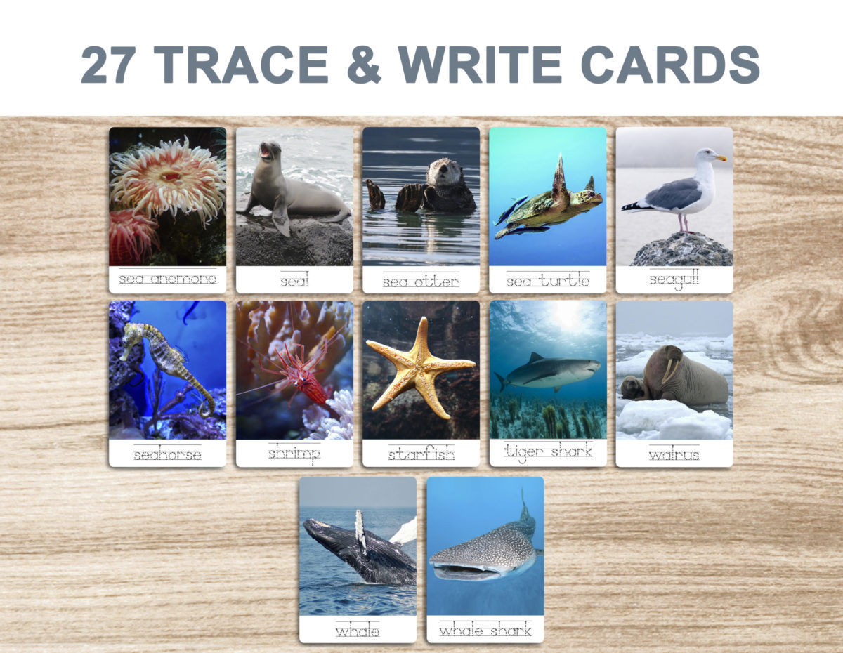 7a. Sea Animals – Trace and Write Cards template