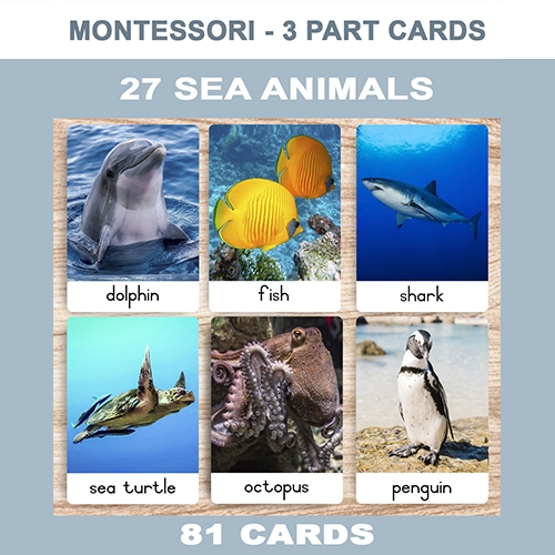 SEA ANIMALS – NEW Website Cover – ENG